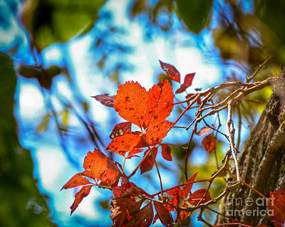 Photograph - The Heart Of Autumn by Kerri Farley