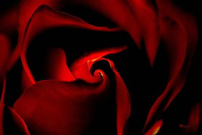 The Heart Of The Rose Original by Max Steinwald