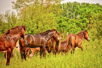 Photograph - The Herd by Ingrid Dendievel