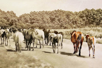 The Herd Art Print by JAMART Photography