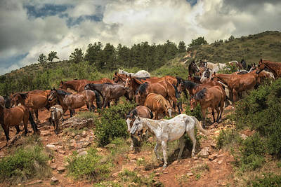 Photograph - The Herd by Ryan Courson