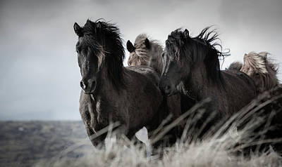 Iceland Horse Wall Art - Photograph - The Herd by Tim Booth