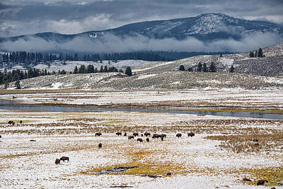 Photograph - The Herd by Victor Culpepper