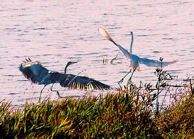 Photograph - The Heron And The Egret by Steve Karol