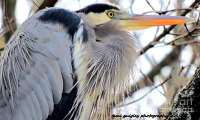 Photograph - The Heron In Winter  by Tami Quigley
