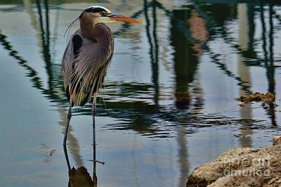 Photograph - The Heron's Brother by Diana Mary Sharpton