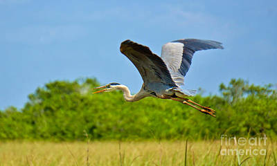 Photograph - The Heron's Flight by Judy Kay