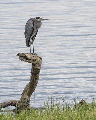 Photograph - The Herons Pearch  by Gary Neiss