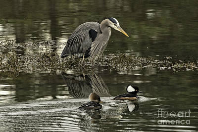 Photograph - The Heron's Watchful Eye by Moore Northwest Images