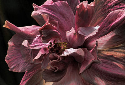 Photograph - The Hibiscus Collection - 2 By H H Photography Of Florida  by HH Photography of Florida