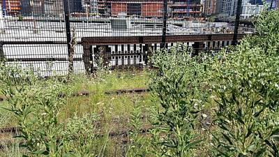 Photograph - The High Line 199 by Rob Hans