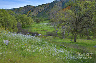 Photograph - The Hills Are Alive 2 by Debby Pueschel