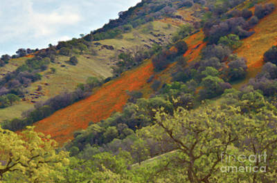 Photograph - The Hills Are Alive by Debby Pueschel
