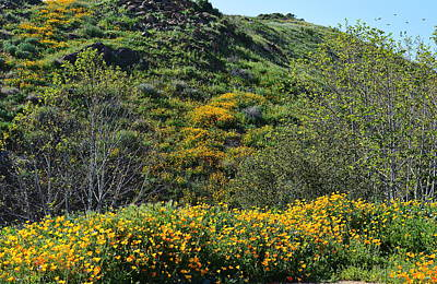 Photograph - The Hills Are Alive - Poppies by Glenn McCarthy