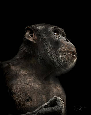 Chimpanzee Photograph - The Hitchhiker by Paul Neville