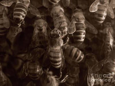 The Hive Print by Jeff Breiman