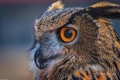 Photograph - The Hooter by Mitch Shindelbower