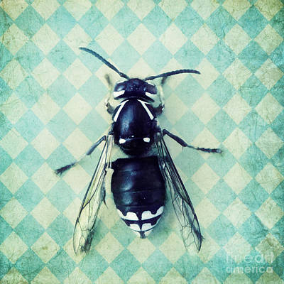 The Hornet Art Print by Priska Wettstein
