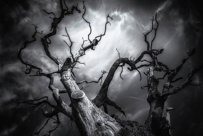 Fantasy Bark Photograph - The Horror by Chris Fletcher