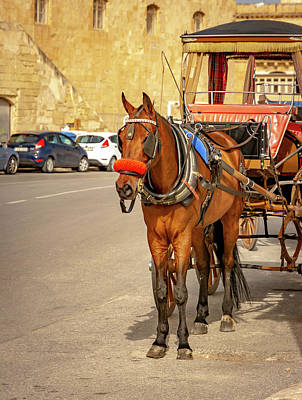 Photograph - The Horse And Carriage by Andrew Matwijec