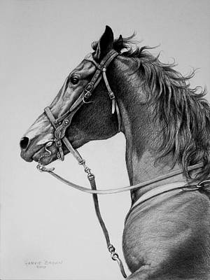 Western Bridle Drawing - The Horse by Harvie Brown
