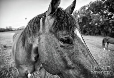 Photograph - the Horses of Blue Ridge 1 by Blake Yeager