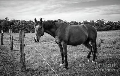 Photograph - the Horses of Blue Ridge 2 by Blake Yeager