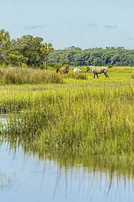 Photograph - The Horses Of Cumberland Island by Paula Porterfield-Izzo