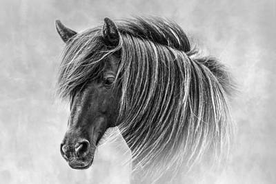 Photograph - The Horses Of Iceland by Brad Grove