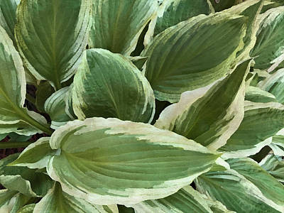 Photograph - The Hosta Plant by Sandi OReilly