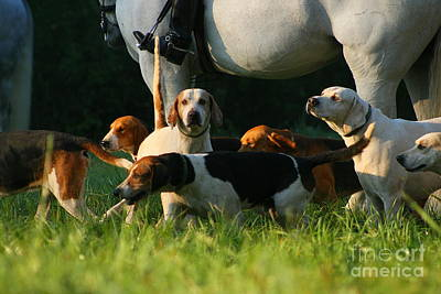 Photograph - The Hounds by Angela Rath