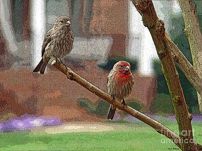 Photograph - The House Finch Pair by Sue Melvin
