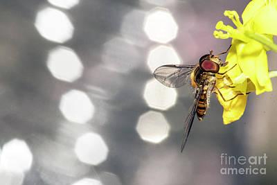 Photograph - The Hoverfly by Odon Czintos