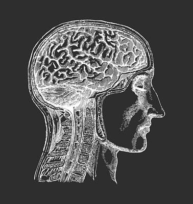 The Human Brain - White On Black Art Print by Village Antiques