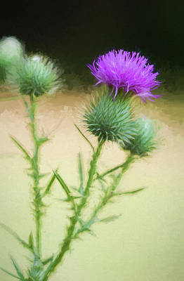 Photograph - The Humble Thistle by Kathy Clark