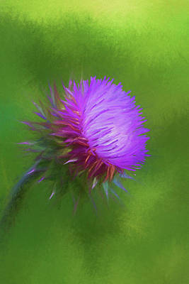 Photograph - The Humble Weed by Kathy Clark
