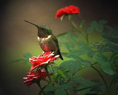 Digital Art - The Hummer And The Rose by Carrie OBrien Sibley