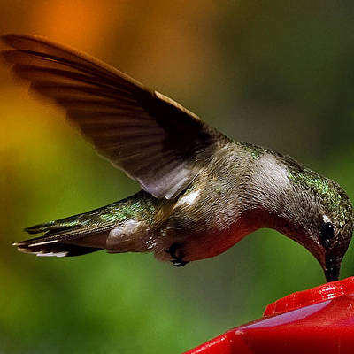 Photograph - The Hummer by David Patterson