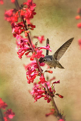 Photograph - The Hummingbird And The Spring Flowers  by Saija Lehtonen