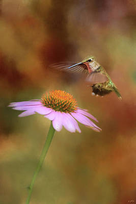 Photograph - The Hummingbird Approach by Jai Johnson