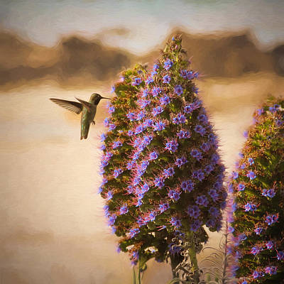 Photograph - The Hummingbird's Pride by Susan Rissi Tregoning