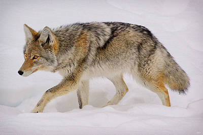 Photograph - The Hunter by Greg Norrell