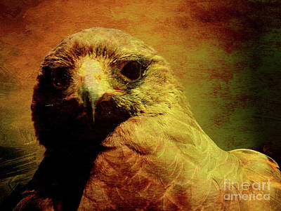 Hawk Birds Digital Art - The Hunter . Portrait Of A Hawk . Texture . 40d7877 by Wingsdomain Art and Photography