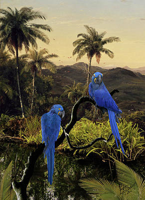 Painting - The Hyacinth Macaws Of The Tropics by IM Spadecaller