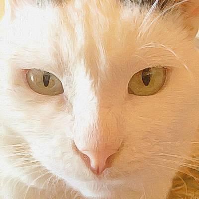 Cat Photograph - The Hypno Eyes. by Mikhail Zhirnov