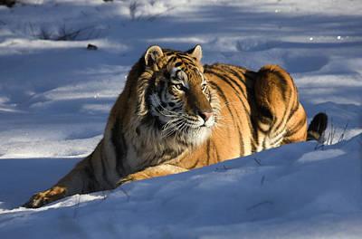 Siberia Digital Art - The Ice King by Dewain Maney