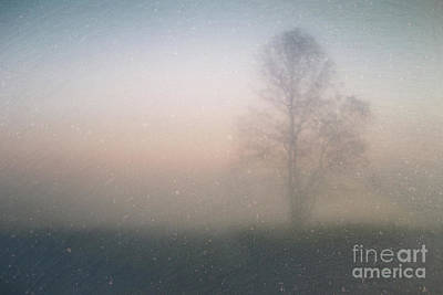 Photograph - The Ice Tree by Joel Witmeyer