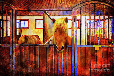 Photograph - The Iceland Horse 1 Of Hester-stables  by Craig J Satterlee