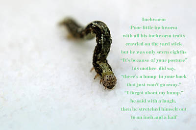 Photograph - The Inchworm by Tikvah's Hope
