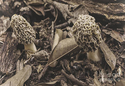 Louis Armstrong - The Incredible Edible Morel Mushroom by James Wollard